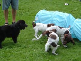 Foto 2 Hundeschule Bremen: Neue Welpenkurse