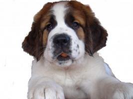 Hundeschule mit Herz