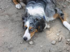Foto 2 Hundeschule mit Herz
