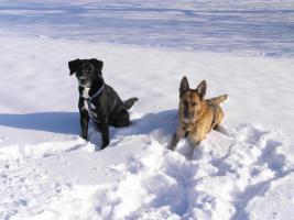 Hundesitter(in) sofort gesucht