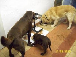 Foto 2 Hundesitting!!!