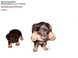 Foto 4 Hundewelpen zum Verkauf