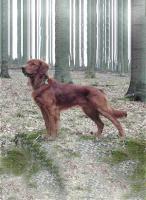Hundezubehör und eleganter Rüde