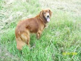 Foto 5 Hundezubehör und eleganter Rüde
