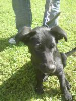 Ich habe eine Labrador Hündin fast 6 Monate alt abzugeben