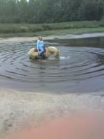 Foto 2 Ich suche eine Reitbeteiligung für mein Fjordpferd