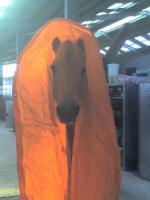 Foto 3 Ich suche eine Reitbeteiligung für mein Fjordpferd