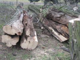 Ihr Baum muss weg - dann melden Sie sich - wir haben die Lösung