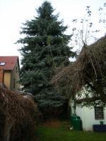 Foto 2 Ihr Baum muss weg - dann melden Sie sich - wir haben die Lösung