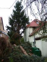 Foto 3 Ihr Baum muss weg - dann melden Sie sich - wir haben die Lösung