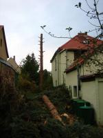 Foto 4 Ihr Baum muss weg - dann melden Sie sich - wir haben die Lösung