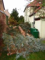 Foto 5 Ihr Baum muss weg - dann melden Sie sich - wir haben die Lösung