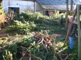 Foto 6 Ihr Baum muss weg - dann melden Sie sich - wir haben die Lösung