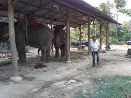 In Thailand neue Existenz???