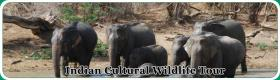 Foto 2 India Wildlife Tour