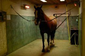 Horsedry / Pferdesolarium