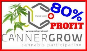 Investieren in Hanf CBD Cannabis 80% Rendite