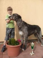 Foto 2 Irischer Wolfshund Superschöne Welpen