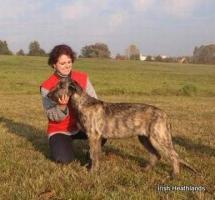 Irischer Wolfshund Welpen abzugeben
