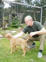 Foto 3 Irish Terrier Welpen FCI