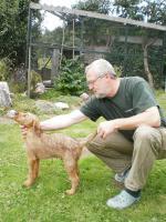 Foto 4 Irish Terrier Welpen FCI
