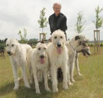 Irish Wolfhound von Koppas Hof