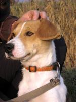 Foto 2 Irisz- eine tapfere Hundemama!