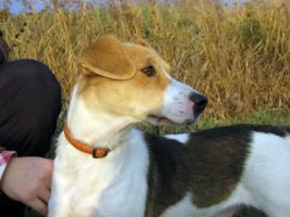 Foto 3 Irisz- eine tapfere Hundemama!