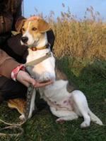 Foto 5 Irisz- eine tapfere Hundemama!