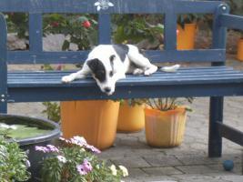 Jack Russel Terrier Hündin sucht neues liebevolles Zuhause  ''22 Wochen alt''