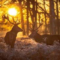 Jagdschein am Wochenende