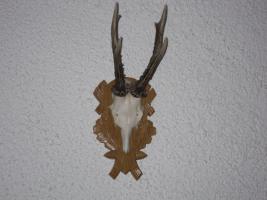 Foto 4 Jagdtrophäen-Geweihe