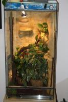 Jemen Chameleon mit oder ohneTerrarium und zubehör