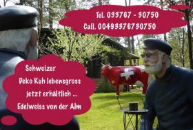 Jetzt bestellen Deko Kuh lebensgross - Edelweiss von der Alm - neue Schweizer Deko Kuh