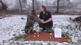 Foto 2 Jugoslawischer Hirtenhund (Sarplaninac) - Hündin 10 Monaten alt