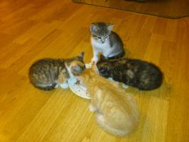 Junge Kätzchen suchen neuen Dosenöffner
