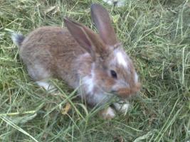 Foto 3 Junge Kaninchen