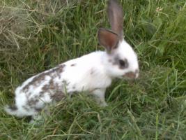 Foto 4 Junge Kaninchen