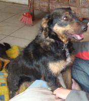 Junger Terrier sucht liebe Familie!