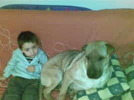 Foto 2 KIARA – kinderliebe Kuschelhündin verliert ihr zuhause