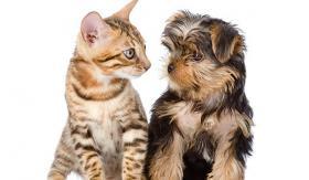 Kaltgepresstes Katzenfutter, Nassfutter, für Katzen & Kitten, Paket
