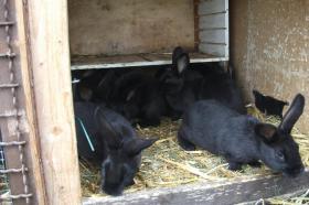 Foto 2 Kaninchen