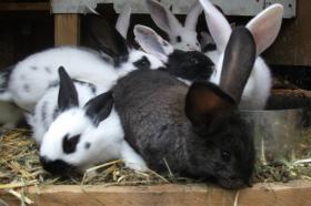 Foto 5 Kaninchen
