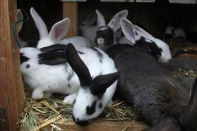 Foto 6 Kaninchen