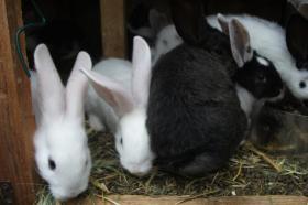 Foto 7 Kaninchen