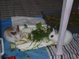 Kaninchen als Geschenk