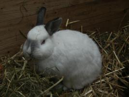 Foto 6 Kaninchen abzugeben