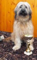 Foto 3 Katalanischer Schäferhund wunderschöne Welpen!