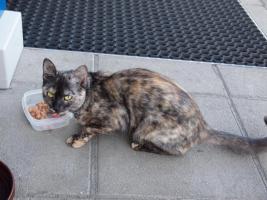 Foto 2 Katze