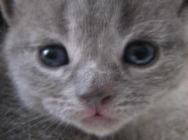 Foto 2 Katze Baby Kitten